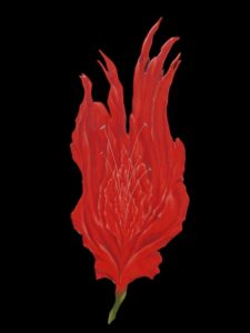 Red Rose jpeg